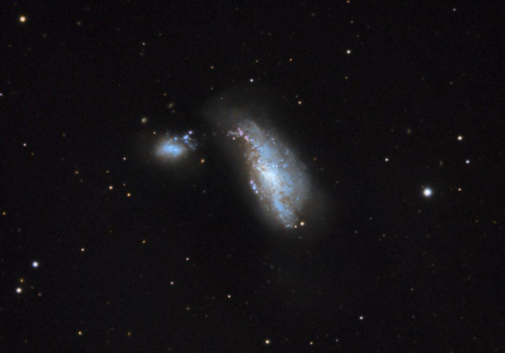 Običaji parenja kod kanibalističkih vanzemaljskih kukaca (galaksija Kukuljica)
